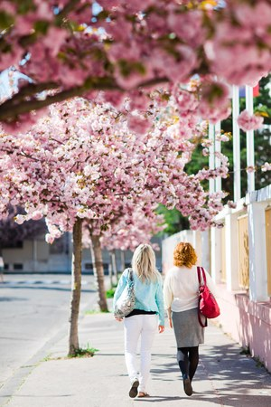 Two women walking under cherry blossom - colorful spring Stock Photo