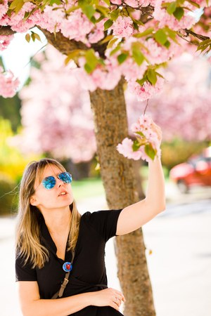 Blond woman under cherry blossom pulling twig to see details Stock Photo