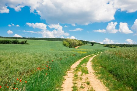 Cart road leading through colorful nature during spring, green fields and blue sky of dreamy country