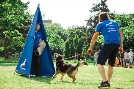 Bratislava, Slovakia - June 2nd 2019 : Best dog of Ruzinov, simulation of dog defense, cop and bandit Editorial