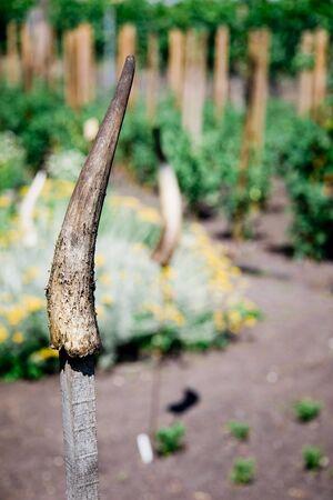 Horns on stick in exotic garden, rural back yard