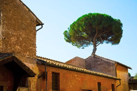 Italian Stone Pines tree - Pinus Pinea - behind old historical building in historic center of Rome, Italy.