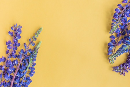 Lupine flower on a yellow background empty space for your text, top view