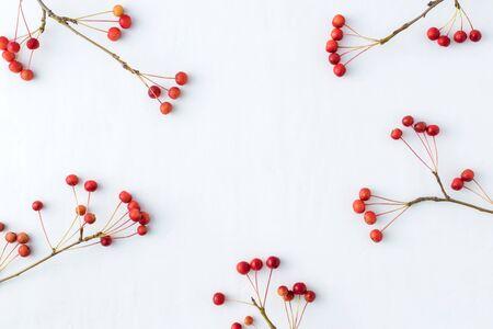 Rami con piccole mele rosse su sfondo bianco. Disposizione piatta, vista dall'alto
