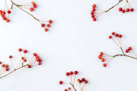 Zweige mit kleinen roten Äpfeln auf weißem Hintergrund. Flache Lage, Ansicht von oben