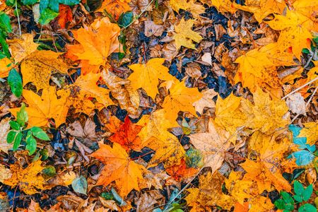 Pattern with colorful leaves in autumn forest