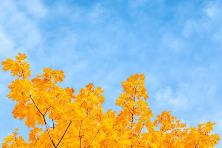 Colorful autumn leaves on a blue sky Stock Photo