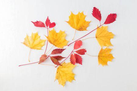 Bright autumn leaves on a light background Archivio Fotografico