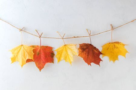 Bright autumn leaves on a light background