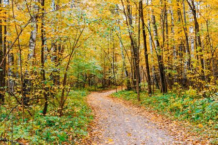 Path in a forest with colorful autumn leaves and trees