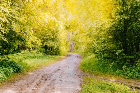 Road in a sunny summer forest with green grass and trees