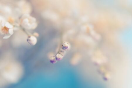 Small white summer flowers on a soft background. Unfocused abstract floral background Banco de Imagens