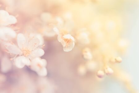 Small white summer flowers on a soft background. Unfocused abstract floral background