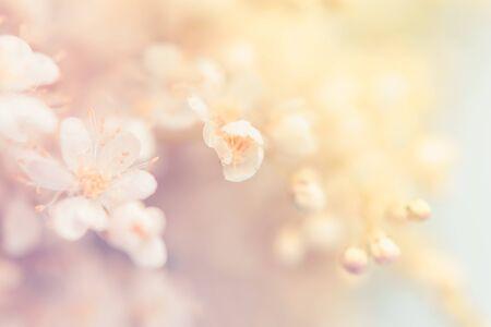 柔和的背景上点缀着夏日的白色小花。不聚焦的抽象花背景