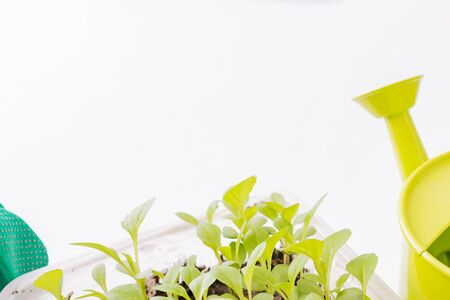 Composition with garden tools and plants on a white background