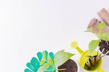 Flat lay composition with garden tools and plants on a white background  Imagens