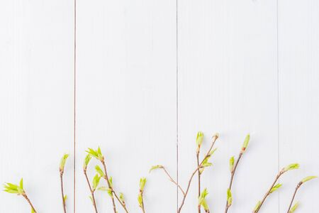 Flat lay composition with green buds on branches on a white wooden background Imagens