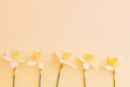 Flat lay easter border with yellow daffodils on a yellow background Imagens