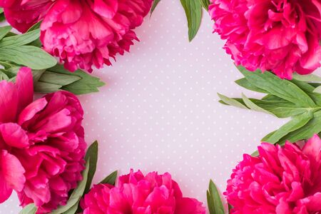 Flat lay composition with red peonies and green leaves on a pink background