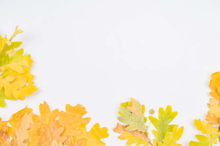 Flat lay composition with colorful autumn leaves on a white background Foto de archivo