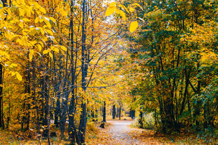 Footpath in the autumn park with colorful trees and leaves