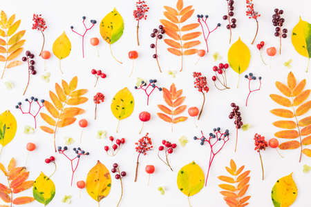 Flat lay pattern with colorful autumn leaves and berries on a white background Standard-Bild