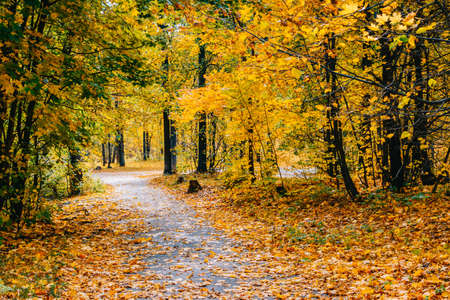 Footpath in the autumn park with colorful trees and leaves Archivio Fotografico
