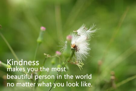 Inspirational quote - Kindness makes you the most beautiful person in the world, no matter what you look like. With Flower in grass. White grass flower blown off. Life, love, peace and kindness concept.