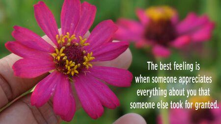 Mots inspirants - Le meilleur sentiment est quand quelqu'un apprécie tout ce que quelqu'un d'autre a pris pour grandi. Avec la fleur de zinnia rose tient par le doigt montrant l'appréciation. Banque d'images