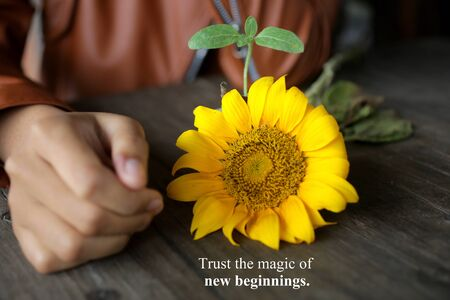 Inspirational quote - trust the magic of new beginnings. With young woman hand, yellow sunflower blossom and the baby sunflower plant. Life process concept.