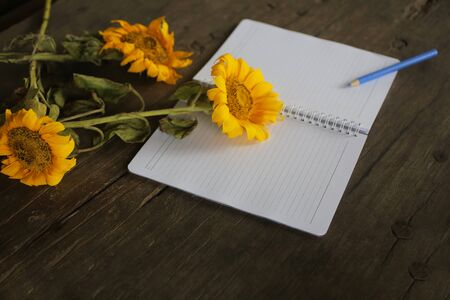 Blank notebook with flowers. Messy wooden table with sunflowers, open blank page of spiral notebook and a pen. Stok Fotoğraf