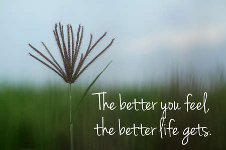 Inspirational motivational quote - The better you feel, the better life gets. With single wild grass flower on blur blue green minimalism background. The concept of attracting good feelings to come. Foto de archivo