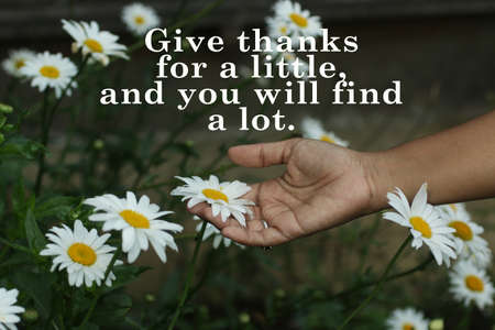 Gratitude inspirational quote - Give thanks for a little, and you will find a lot. With hand holding white daisy flower in daisies garden. Thanksgiving concept with nature background.