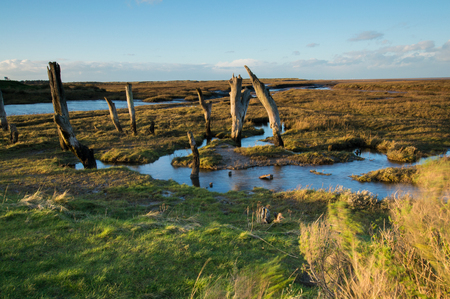 protruding: Protruding Wood at Low Tide, on Norfolk Coast Stock Photo