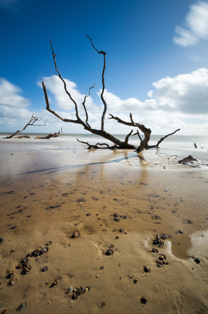 Some trees sunken into the sand at Southwold, Suffolk Stock Photo