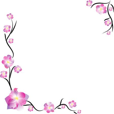 rosy: Sakura frame, isolated on white