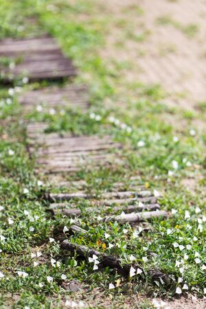 Old wooden walkway on the beach overgrown with flowers and grass