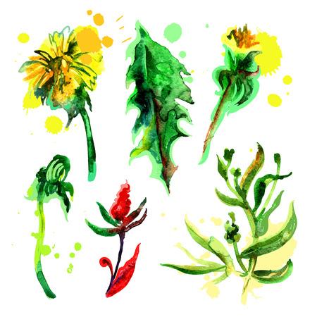 flores de acuarela  Vectores