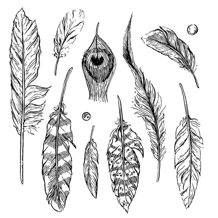 feather pen: Beautiful hand drawn sketch of feathers for your design Illustration