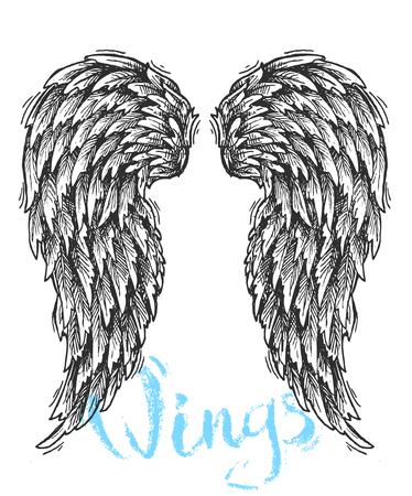 angel devil: Beautiful hand drawn sketch of wings for your design