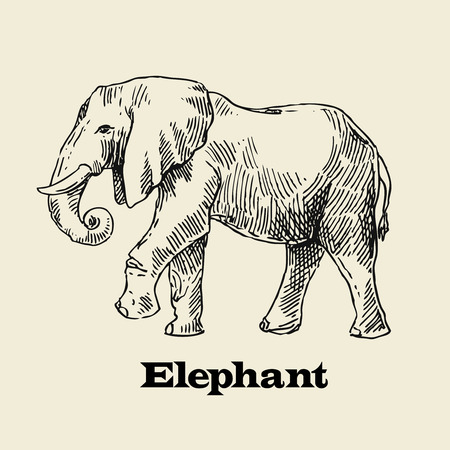 asiatic: Beautiful vector hand drawn elephant for your design