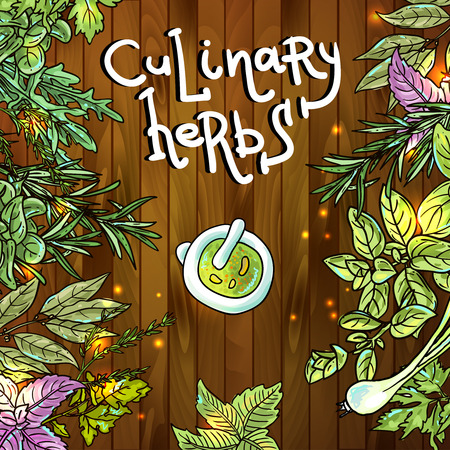 herb garden: Beautiful hand drawn vector background of culinary herbs