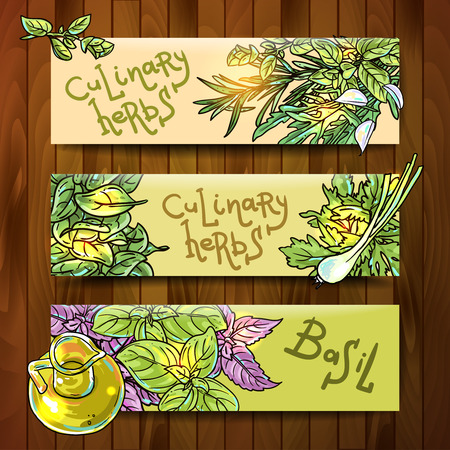 culinary: Set of beautiful hand drawn vector  banners with culinary herbs Illustration