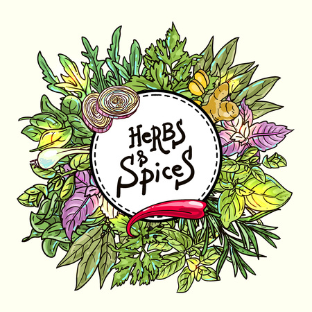culinary: Beautiful hand drawn vector  illustration of culinary herbs and spices