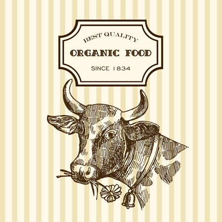 ruminant: Beautiful hand drawn sketch illustration milk product for your design. Organic milk. Illustration