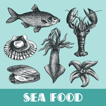 Mooie kant getrokken vector illustratie zee eten. Zee voedsel graveren stijl. Seafood menu. Stock Illustratie