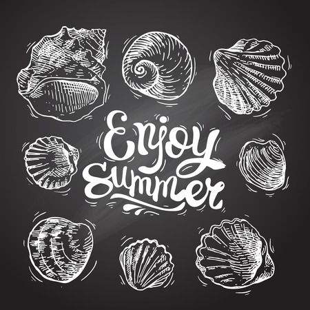 sea shell: Hand drawn sea shell. Set of sketches shells. Shell illustration for your design. Illustration
