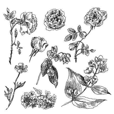 Belle dessiné à la main des fleurs illustration boho. Des fleurs pour les invitations de mariage boho style. Decorative illustration floral avec des fleurs de roses et de jasmin. Vecteurs