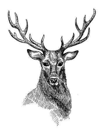 hooves: Hand drawn illustration deer. Sketch of deer. Black and white isolated deer.