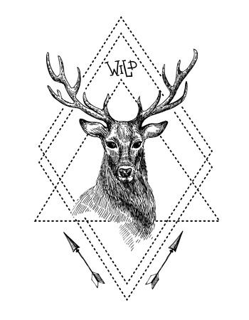 rut: Hand drawn illustration deer. Sketch of deer. Black and white isolated deer.